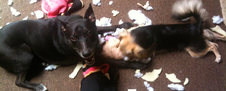 Dog Toy Mistakes