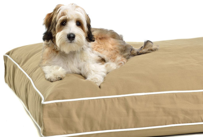 Dog Gone Smart Pet Products Repelz-It Ninja Bed