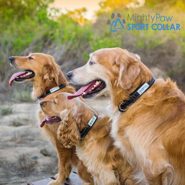 The Mighty Paw Dog Collar - Dogs