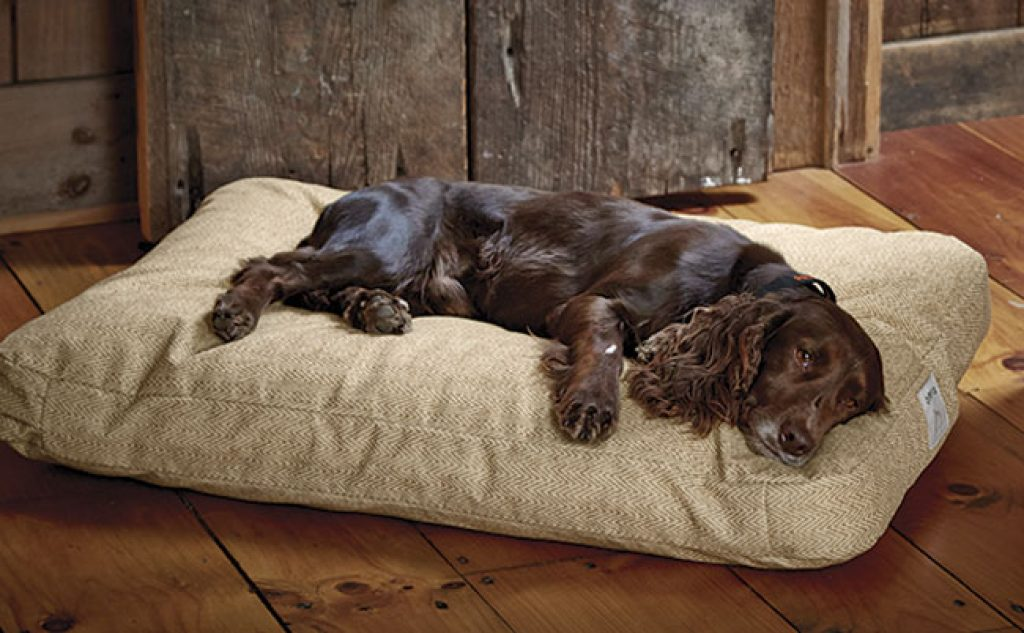 Indestructible Dog Beds Top 5 Beds And Reviews