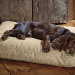 Toughchew Dog Bed with Polyester Fill by Orvis