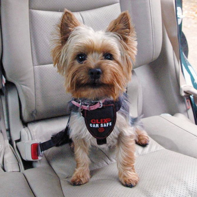 Car Safety Harness for puppy dog