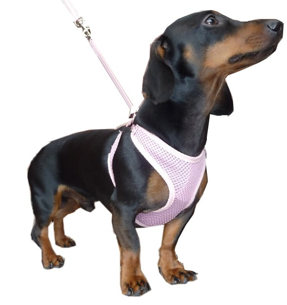hdp dog harness