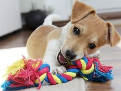 Indestructible Dog Toys for Small Dogs