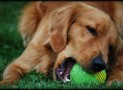 Benefits of using indestructible dog toys