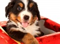 Things you must buy for your new puppies